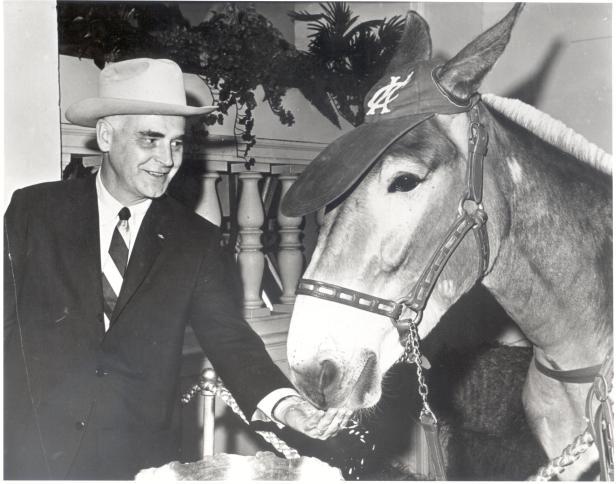 Charlie O The Mule